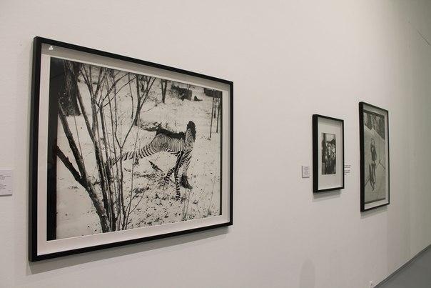 Выставка: «Верушка. Автопортреты. Нью-Йорк. 1994-1998». (Фоторепортаж)