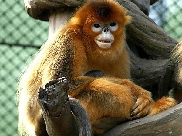 Гороскоп на 2016 год (Огненной обезьяны) - Телец