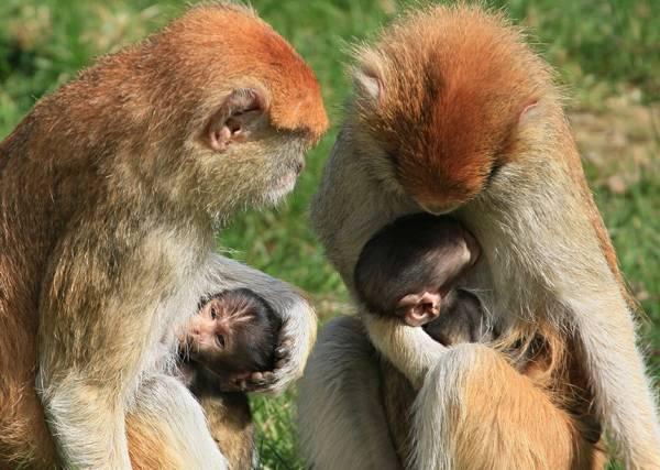 Гороскоп на 2016 год (Огненной обезьяны) - Близнецы