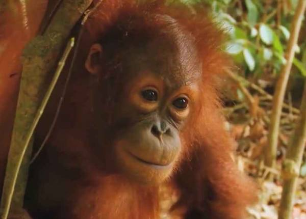 Гороскоп на 2016 год (Огненной обезьяны) - Водолей