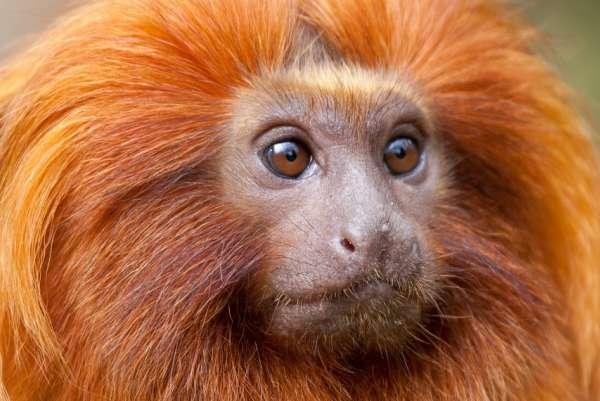 2016 - год огненной обезьяны